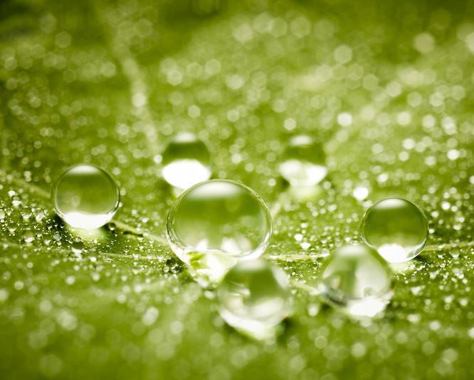 HQ_IMG_Water_Drops_On_Green_Leaf.jpg